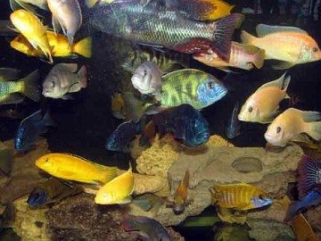 Bartcop entertainment archives sunday 27 june 2010 for Koi pond designs south africa